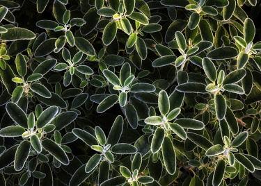 ENG16592AW England, West Yorkshire, Calderdale. Morning light illuminating frosty plants.