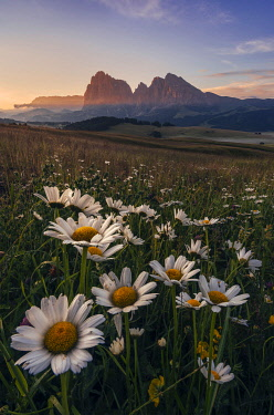 ITA15249AW Summer sunrise at the Alpe di Siusi (Seiser Alm) in the Dolomites, Italy