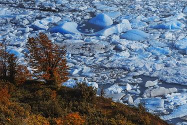ARG3148AW Perito Moreno lagoon contrasting with autumn vegetation, Los Glaciares National Park, Patagonia, Argentina