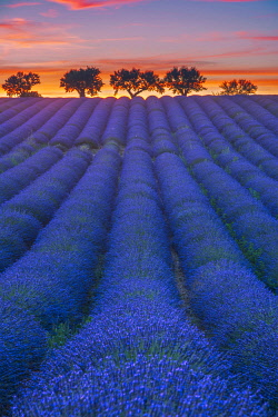 FRA11829AW Lavender's fields at sunset near Valensole, Provence, France