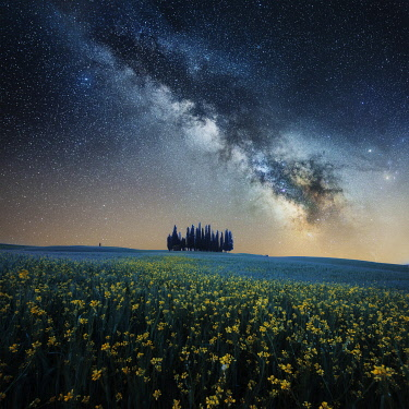 ITA15332AW Milky way above the cypress forest in Val d'Orcia, Tuscany, Italy