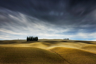 ITA15346AW Cypresses and rolling hills near Montalcino, Val d'Orcia, Tuscany, Italy