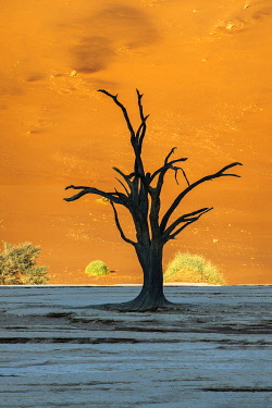 NAM6686AWRF Old dead tree, Deadvlei, Namib-Naukluft National Park, Sesriem, Namibia