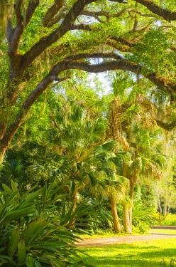 US10AMI0099 USA, Florida. Botanical gardens, Washington Oaks Gardens State Park.