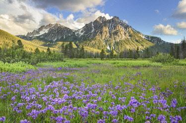 US13AMA0011 USA, Idaho. McGown Peak Sawtooth Mountains.
