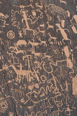 US45JZI0572 USA, Utah. Ancient petroglyphs, Newspaper Rock, Indian Creek Canyon, Bears Ears National Monument.
