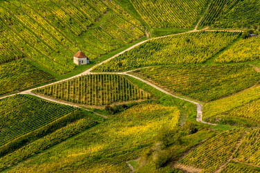 IBLBJA05123964 Vineyards of Chateau-Chalon village, Jura department, Bourgogne-Franche-ComtE�, France, Europe