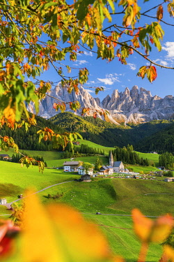 ITA15408AWRF St. Magdalena in Autumn, Val di Funes, Dolomites, South Tyrol, Italy
