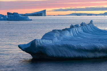 GRN1422 Giant icebergs floating along the west coast of Greenland