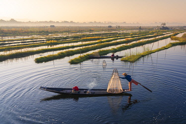 MYA2593AWRF Leg-rowing fisherman with a traditional conical net rowing by Floating Gardens on Lake Inle on early morning, Lake Inle, Nyaungshwe Township, Taunggyi District, Shan State, Myanmar