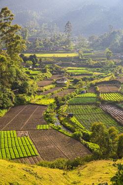 IN485RF India, Kerala, Munnar, Farm lands