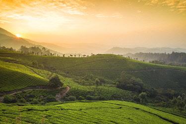 IN04448 India, Kerala, Munnar, View over tea estates at sunrise
