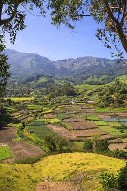 IN04458 India, Kerala, Munnar, Farm lands