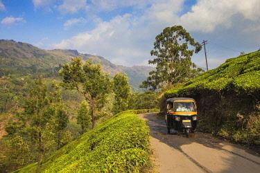 IN04463 India, Kerala, Munnar,