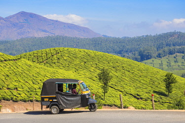 IN04475 India, Kerala, Munnar, Tea estate
