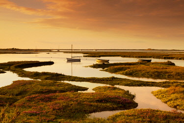 ENG16742AW Evening Light on Brancaster Salt Marshes, Branscater, Norfolk, England