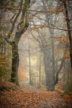 UK08818 UK, England, Shropshire, Ludlow, Whitcliffe, Whitcliffe Common