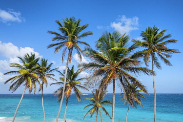 CLKAB129414 Tall palm trees and turquoise sea in background, Bottom Bay, Barbados Island, Lesser Antilles, West Indies
