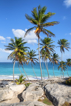 CLKAB129417 Big rocks and tall palm trees of Bottom Bay beach, Bottom Bay, Barbados Island, Lesser Antilles, West Indies