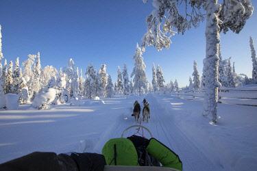 CLKVV127510 Dog sledding in the snowy woods, Kuusamo, Northern Ostrobothnia region, Lapland, Finland