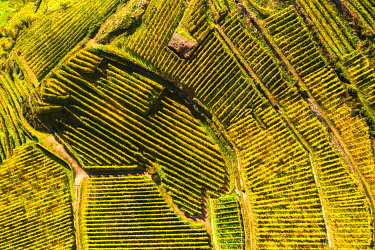 CLKFB128170 Top-down high angle view of vineyards, Valtellina