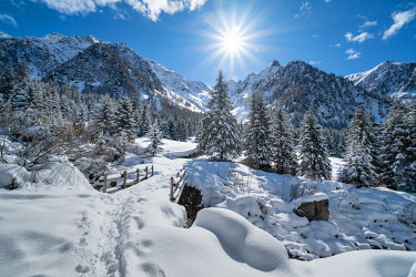 CLKGM129401 Winter mountain landscape with snowcapped trees and sunlight in backlight. Rezzalo valley, SOndalo, Sondrio district, Valtellina, Alps, Lombardy, Italy