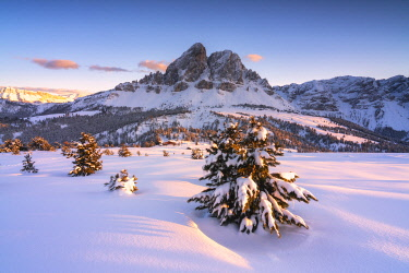 CLKMR126503 Last lights of sunset on the snowy woods framing Sass De Putia, Passo Delle Erbe ,Funes Valley, South Tyrol, Italy