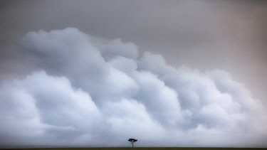 CLKMG126108 A lonely tree in the vast grassland of the Maasai Mara game reserve, Kenya