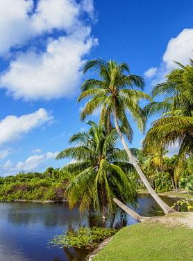 CYI1064AW Queen Elizabeth II Botanic Park, North Side, Grand Cayman, Cayman Islands