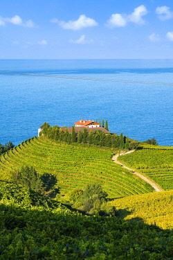 CLKAC128627 Eitzaga, Guipuzcoa, Basque Country, Spain. Hills of vineyards near the sea