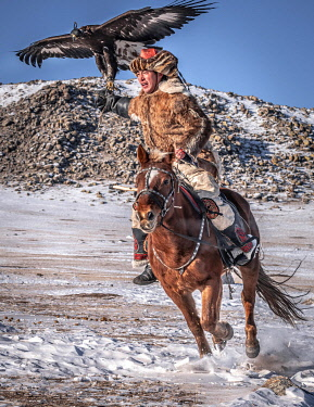 IBLBAY05115707 Mongolian eagle hunter, Kazakh rides horse with trained eagle in winter, Bayan-Olgii province, Mongolia, Asia