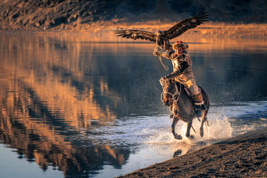 IBLBAY05115729 Mongolian eagle hunter, Kazakh rides on horseback through water with trained eagle, Bayan-Olgii province, Mongolia, Asia