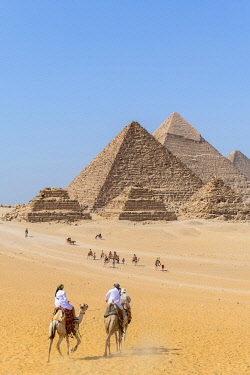 EGY1735AW Camels train at the Pyramids of Giza, Giza, Cairo, Egypt