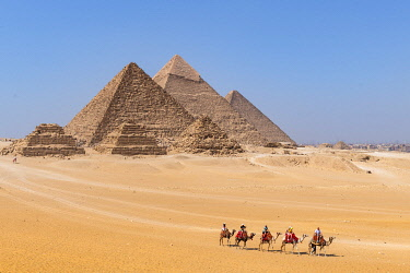 EGY1739AW Camels train at the Pyramids of Giza, Giza, Cairo, Egypt