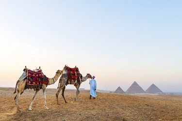 EGY1748AW Man and his camels at the  Pyramids of Giza, Giza, Cairo, Egypt