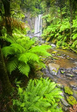 AUS4217AW Fern trees surround Hopetoun Falls and the Hopetoun River. Hopetoun Falls, Ottaways National Park, Victoria, Australia