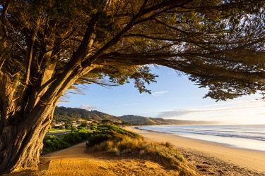 AUS4230AW Apollo Bay Beach and Tree. Apollo Bay, Great Ocean Road National Park, Victoria, Australia
