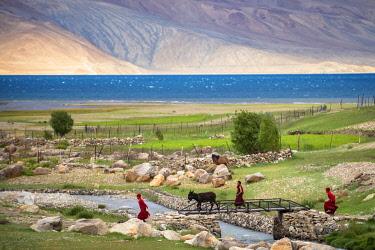 IND8615 India, Changtang Plateau, Tso Moriri, Young Monks bringing a donkey home