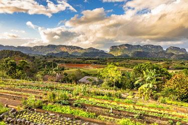 CUB2450AWRF Vinales Valley, Pinar del Rio Province, Cuba