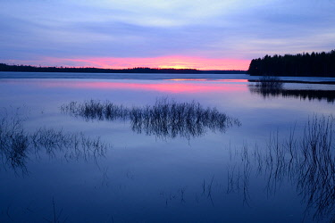 NIS00055601 Sunset on a boreal lake, with bushes in it, Kuhmo, Kainuu, Finland