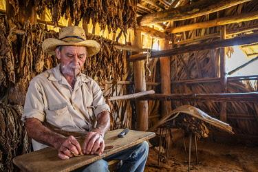 CUB2546AW A tobacco farmer making a Cuban cigar in Vinales, Pinar del Rio Province, Cuba
