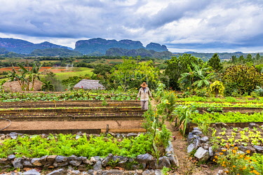 CUB2557AW A farmer working in farm overlooking Vinales Valley, Pinar del Rio Province, Cuba