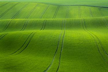 CZE2222AWRF Scenic view of green rolling hills near Kyjov, Hodonin District, South Moravian Region, Moravia, Czech Republic
