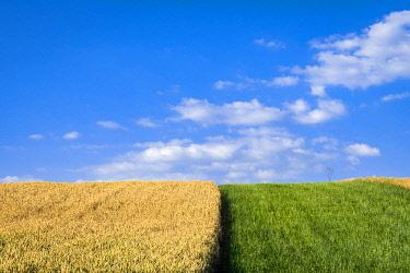 CZE2227AWRF Agricultural field against sky on sunny day near Vrbice, Breclav District, South Moravian Region, Moravia, Czech Republic