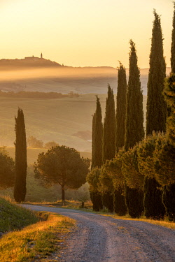 ITA15623AW Europe, Italy, Tuscany, Toscana,San Quirico d'Orcia, cypress alley with view to Pienza