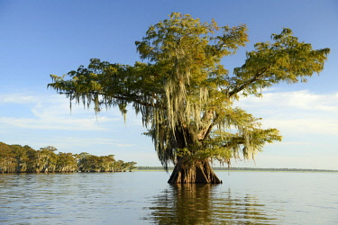 USA15606AW North America; USA; American; South; Seep South; Louisiana; Jefferson Parish; St.Martinville; Lake Fausse;