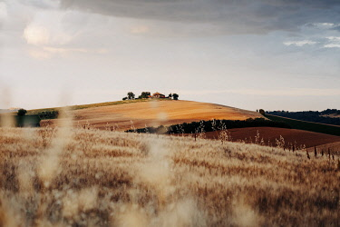 ITA15659AW Rural scene, wheat and hills in Marche region, Central Italy. Urbisaglia, Macerata district