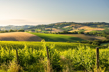 ITA15660AW hills and vineyards in Marche region, Central Italy. Urbisaglia, Macerata district