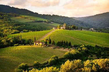 ITA15668AWRF Vineyards and landscape in Chianti Region at sunset. Tuscany, Italy