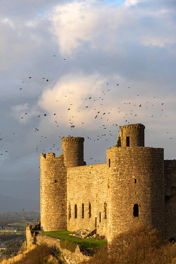 WAL7785 View of Harlech Castle at sunset from the south, Snowdonia, Wales